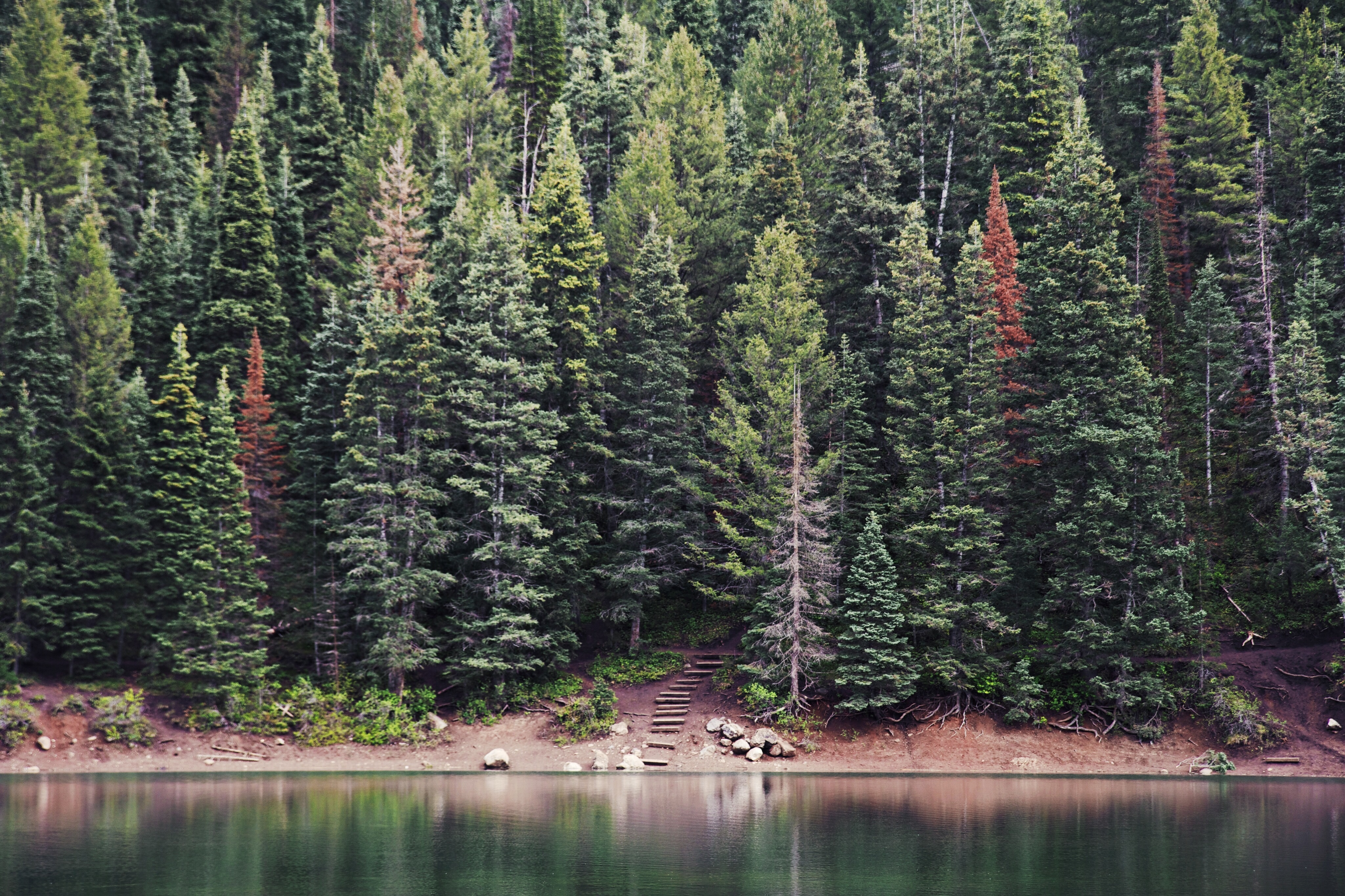 Why We Love Evergreen Content (And You Should, Too!) Featured Image