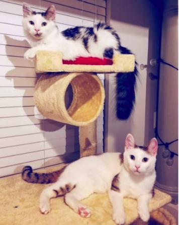 Olivia's cats