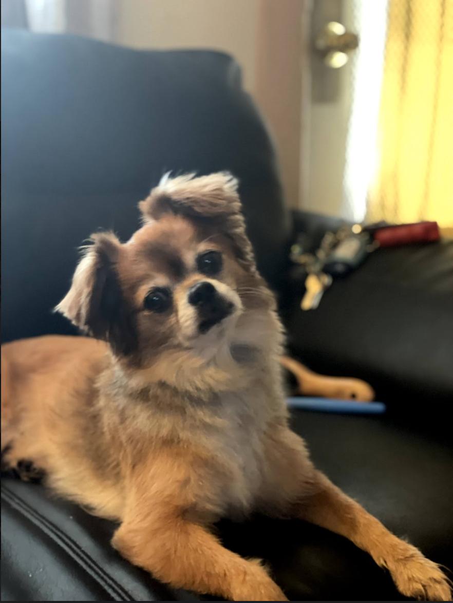 Perla's dog