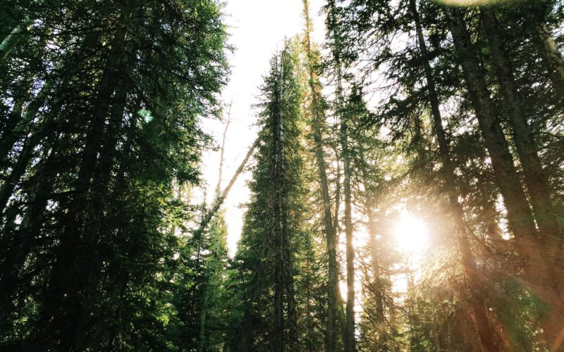When to Use Evergreen v. Timely Content In Your Marketing Thumbnail