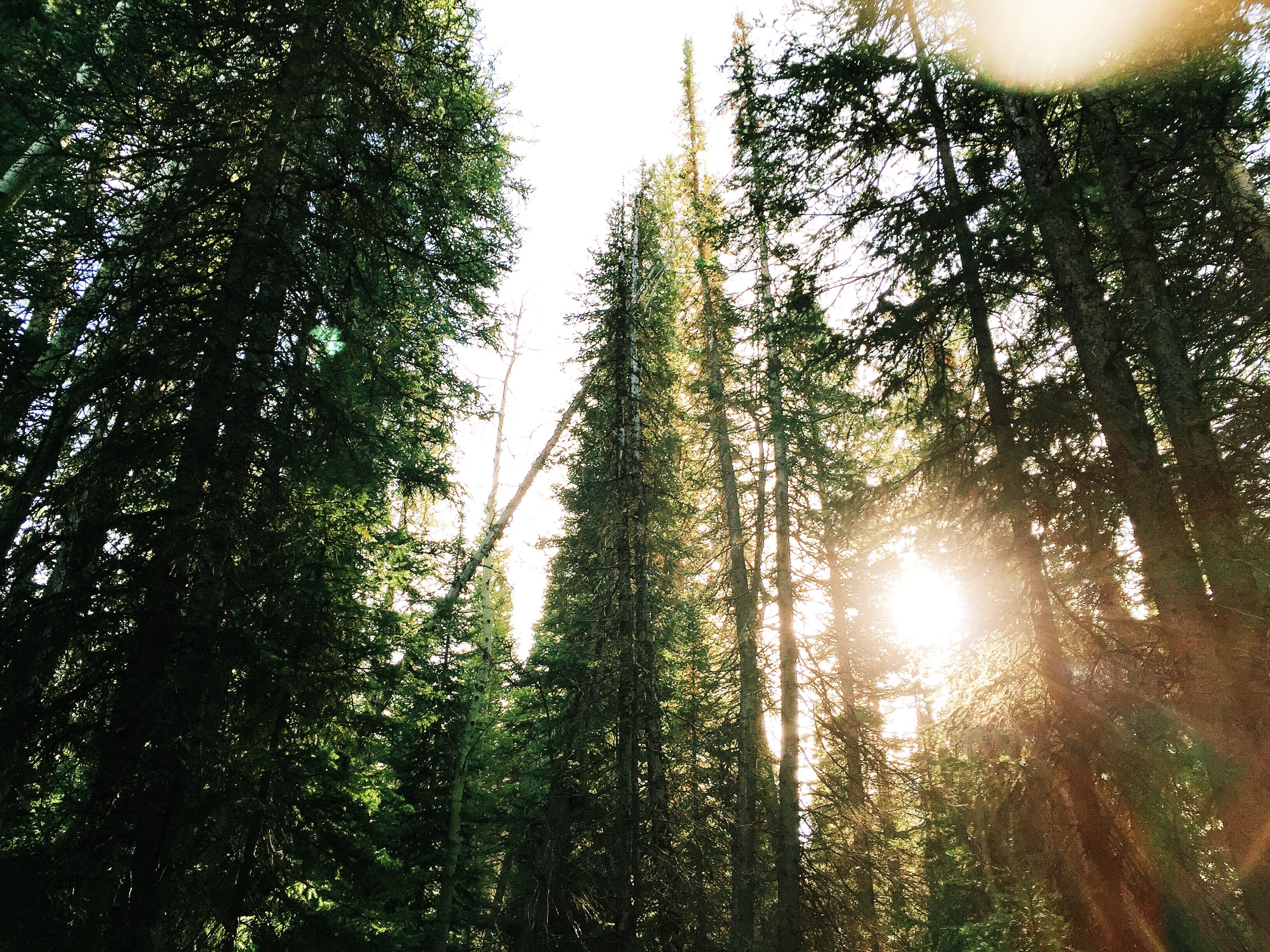 When to Use Evergreen v. Timely Content In Your Marketing Featured Image